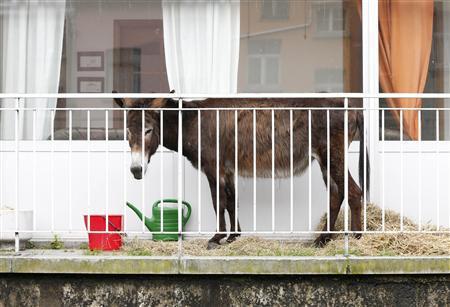 Odluka o uvjetima i načinu držanja domaćih životinja na području Grada Knina