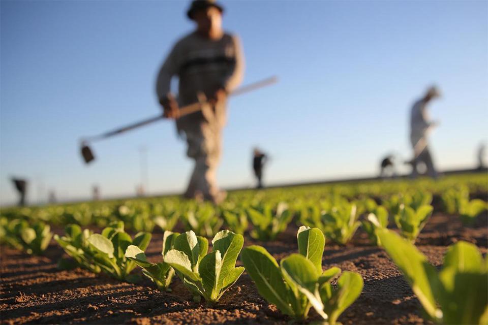 Pregled dodijeljenih potpora u poljoprivredi po Javnom pozivu za dodjelu potpora za 2019. godinu