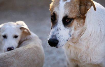 Grad Knin započinje postupak savjetovanja sa zainteresiranom javnošću o Nacrtu prijedloga Odluke o uvjetima i načinu držanja kućnih ljubimaca i načinu postupanja s napuštenim, izgubljenim i divljim životinjama
