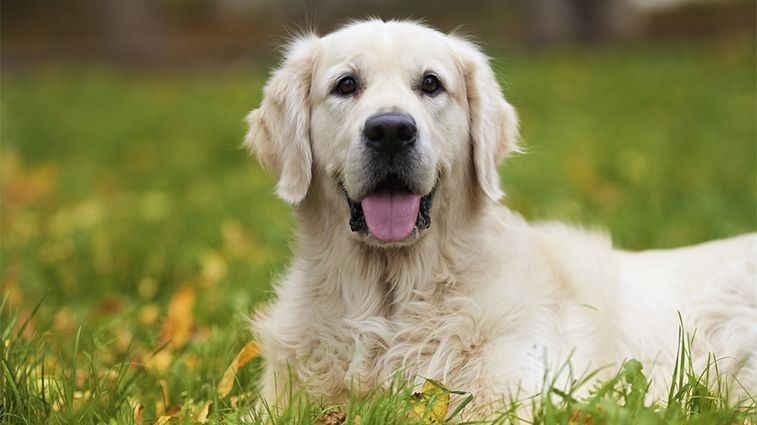 OBAVIJEST vlasnicima/skrbnicima pasa