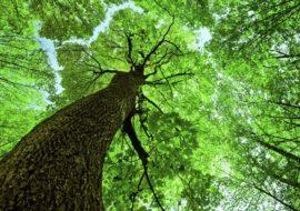 """Poziv na uvodno predavanje za Program za gospodarenje šumama šumoposjednika  """"Kninske šume"""""""